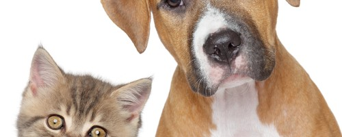 October 8: Blessing of the Animals
